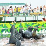 Lobos marinos: ¡Visitantes distinguidos!