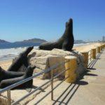 ¡Conoce el Monumento de Lobos Marinos en Mazatlán!
