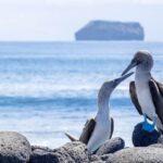 Isla de Pájaros: Una Bella Reserva Natural